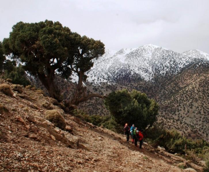 Sabinar espectacular en cordillera del Atlas Marruecos Alpinismo Montañismo