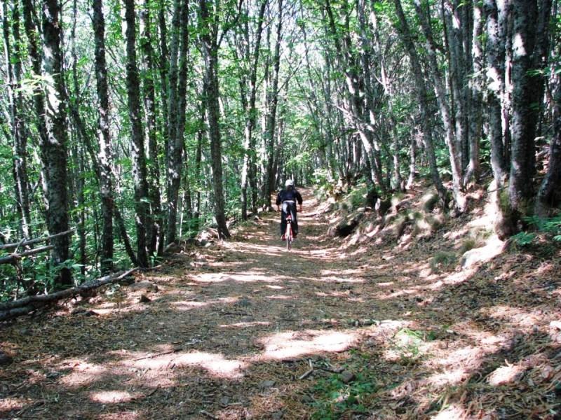 ruta en btt por el castañar de Sierra de Bejar
